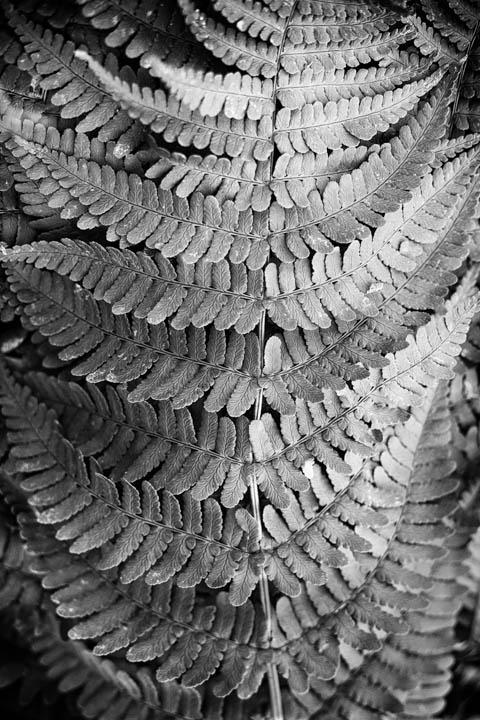 ferns (12 of 46).jpg