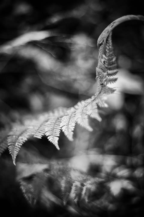 ferns (15 of 46).jpg