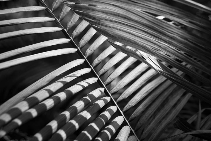 ferns (14 of 46).jpg