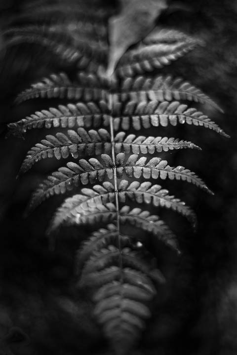 ferns (18 of 46).jpg
