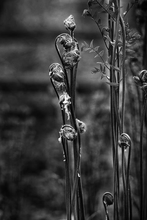 ferns (19 of 46).jpg