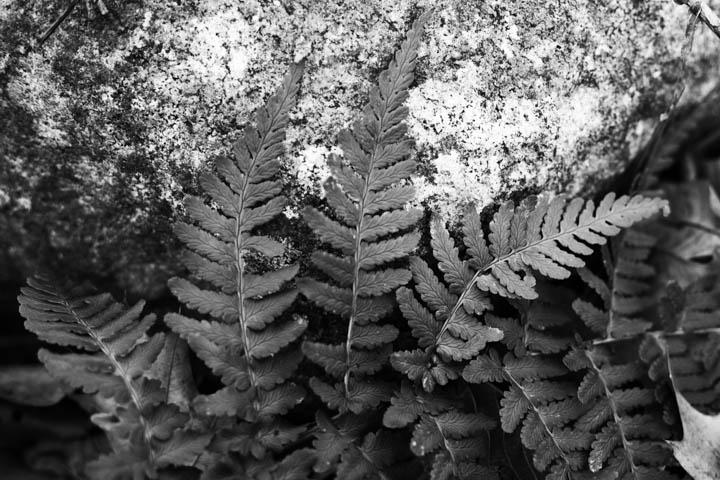 ferns (22 of 46).jpg