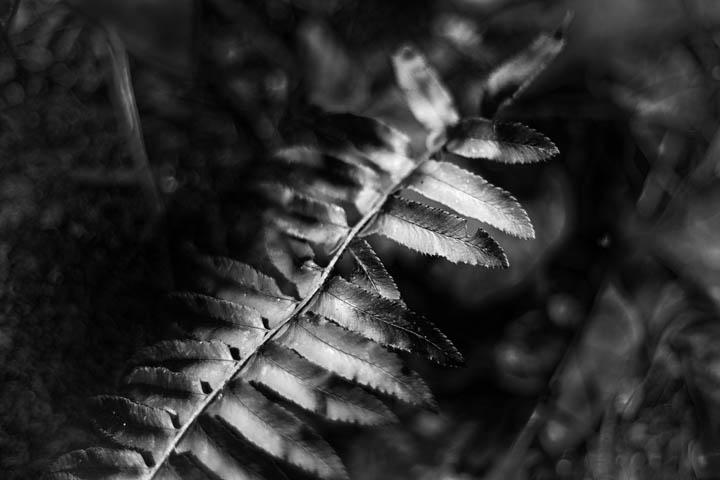ferns (23 of 46).jpg