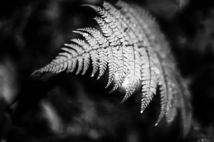 ferns (24 of 46).jpg