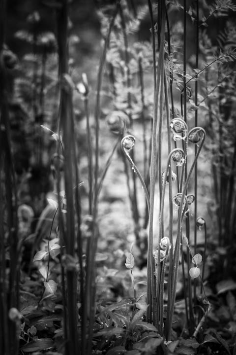 ferns (25 of 46).jpg
