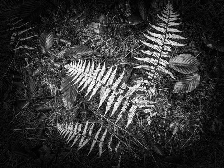 ferns (26 of 46).jpg