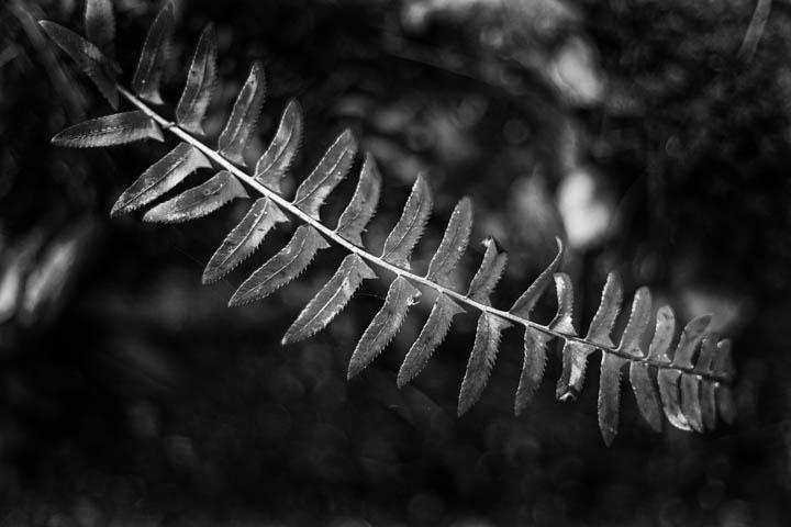 ferns (28 of 46).jpg