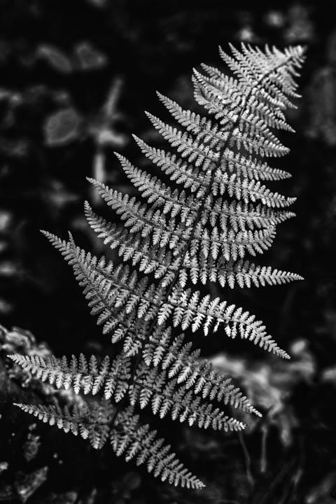 ferns (31 of 46).jpg
