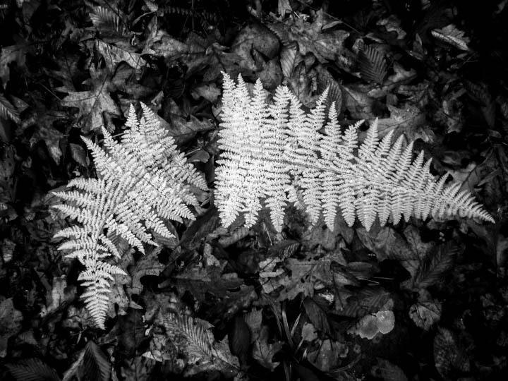 ferns (34 of 46).jpg