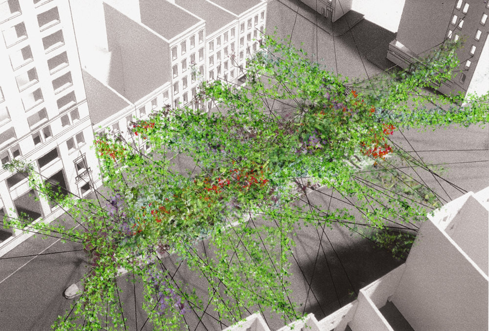 ivy 2 cropped.jpg