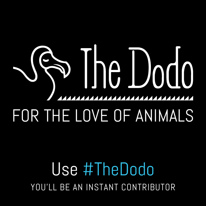 dodo_image