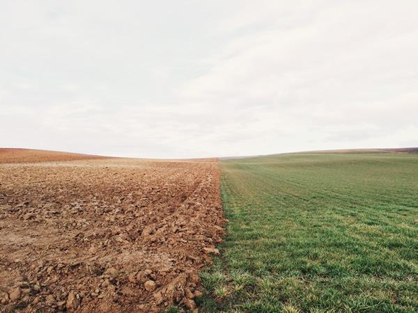 field half plowed