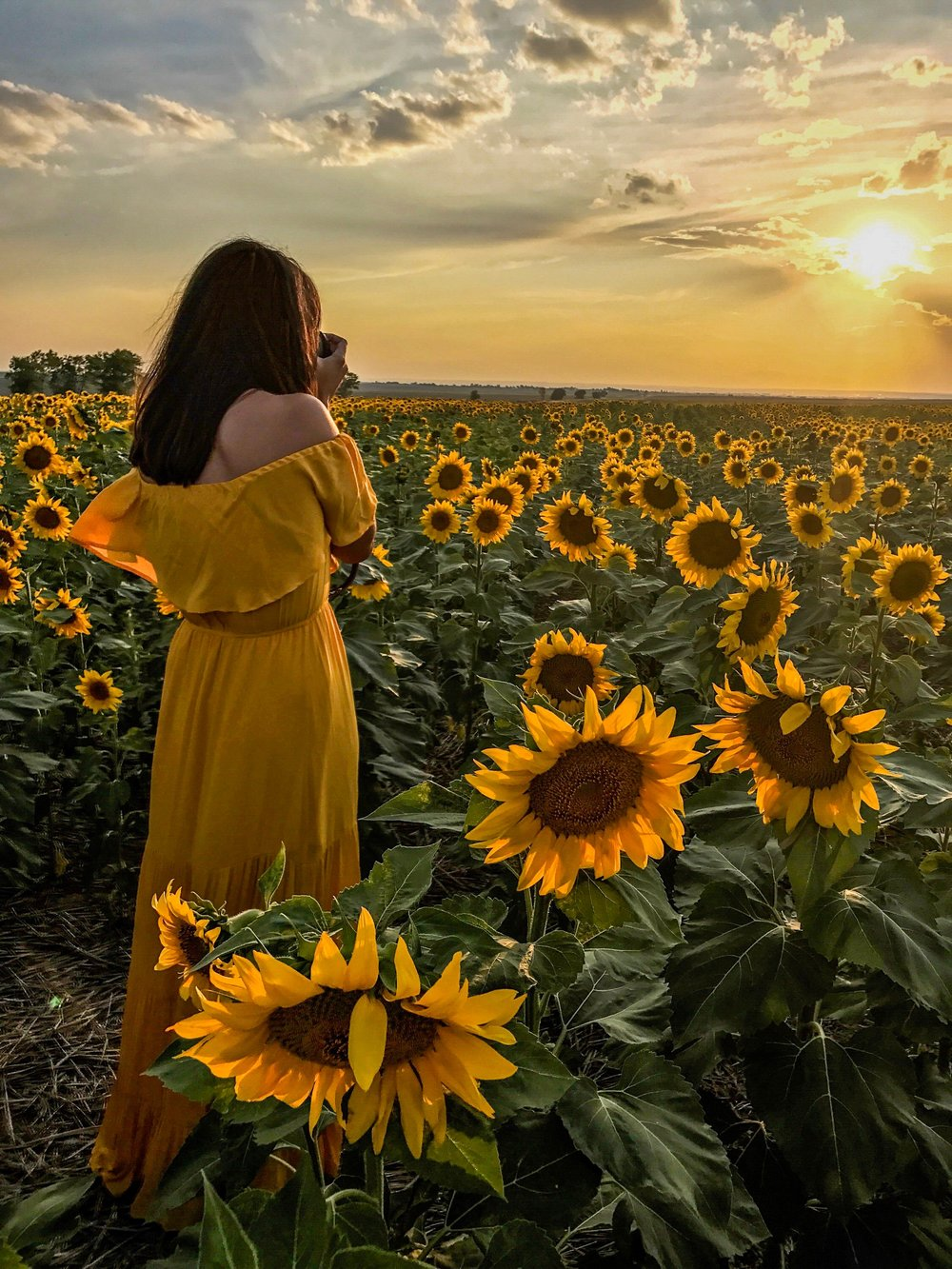 Taking photos in sunflower heaven.