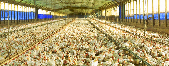 Image from CAFO Connection