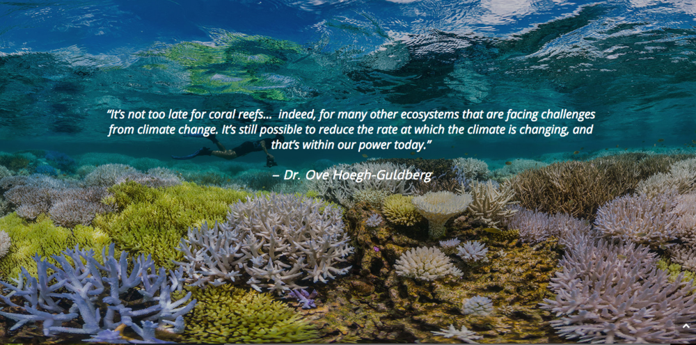 Image taken from www.chasingcoral.com