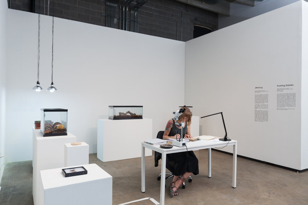 Jitterbug  and  Pushing Daisies  were shown as works-in-progress in an exhibition titled LAND TRUST at RedLine Contemporary Art Center in Aug 2017, as part of the  48 HOURS Summit .  Photo credit: Wes Magyar