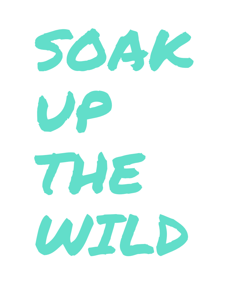 SOAK UP THE WILD
