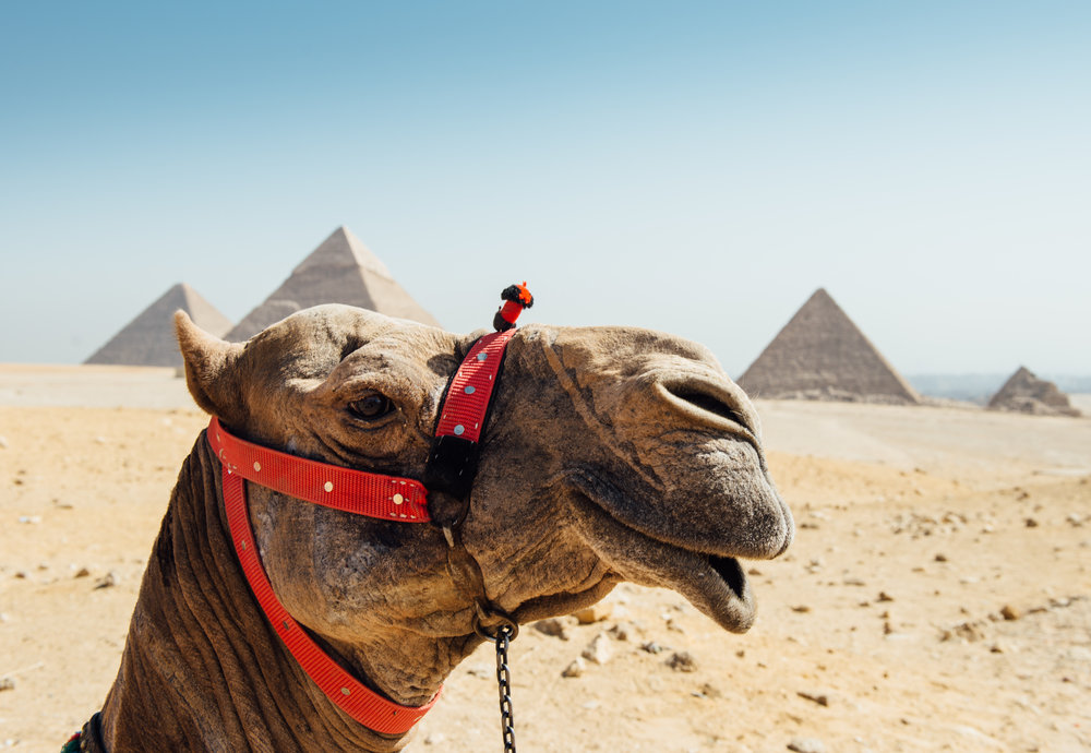 Up close Camel_.jpg