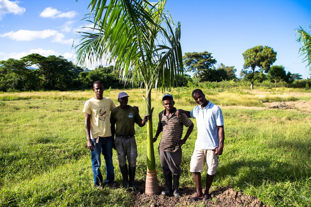 Crew poses after planting tree