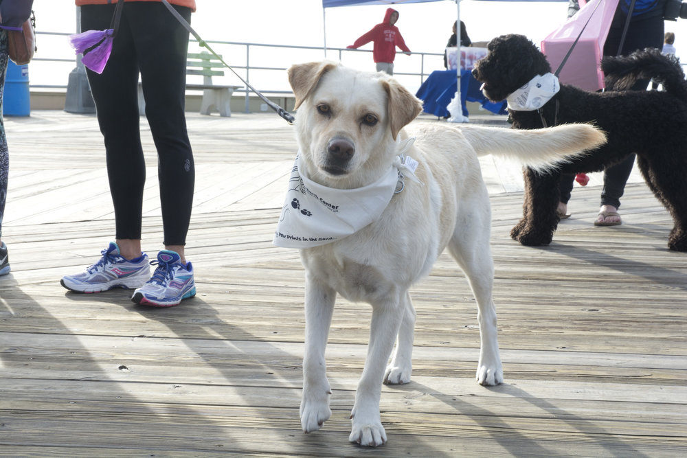 Clean Ocean Action's Sandy Paws 2015. Photo by Clean Ocean Action.