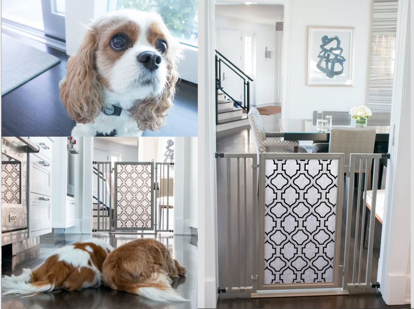 "Fanny and Chelsea wait patiently for mom/42"" Fusion Gate in Satin Nickel finish with Trellis screen"