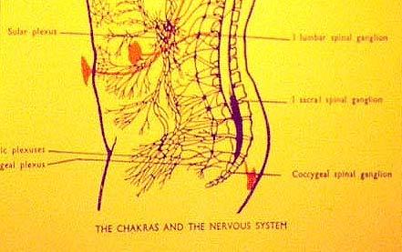 Sacral Spinal Ganglion