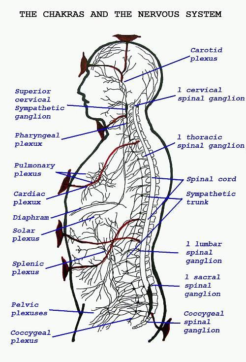 chakra body chart