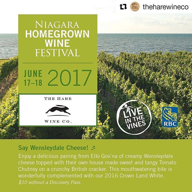 CHEESE & CHUTNEY!  OM NOM NOM!  Finally some Ello Gov grub! 🧀🍾 It's Niagara Homegrown Wine Festival this weekend! Pass holders can enjoy our new release Crown Land White @theharewineco all weekend 🥂