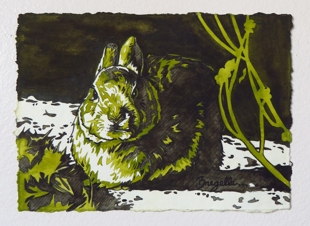 Little Lagomorph Study in Green
