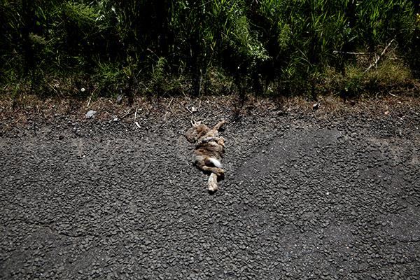 bunny3 - small.jpg
