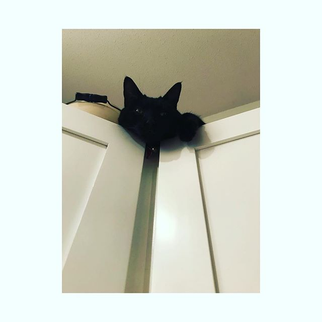 Meet Hazel. She is a curious rescue with a sharp bend in the end of her tail, window hunter, sass-talker, cuddler, menace, queen of our castle, all around independent and ours...actually she pretty well owns us 😽 . . . #cat #catsofinstagram #blackcat #menace #curious #ilovemycat #floristlife #newwest