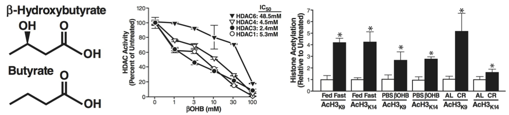 Figure 2. BHB Is an Endogenous Inhibitor of Class I HDACs