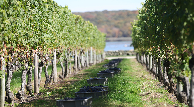 sakonnet-vineyard-1