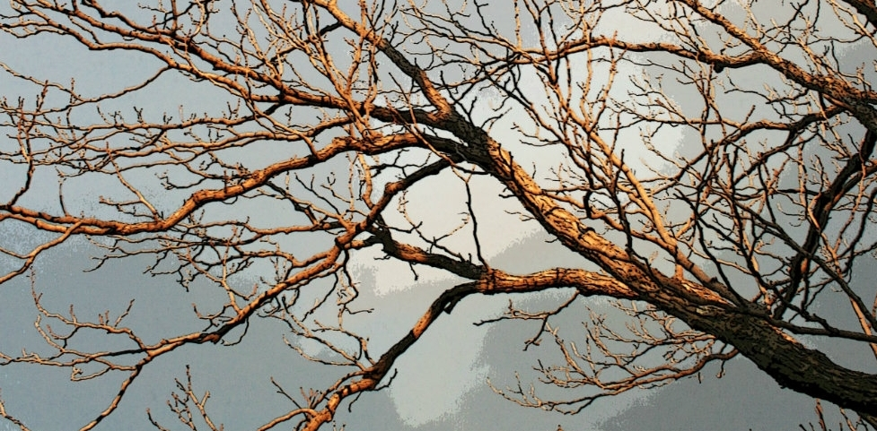 Cast Off Your Leaves - I am a naked treeHowling winds have taken each leafLeaving me, to all onlookersA frail, empty vesselBut I know something they do notI know those leaves were but spent ideasDreams and plans lived and workedAnd coaxed and pled withIndeed, with such vigor and zealAs to drain the green awayGreen means inexperience, newness, beginningAnd while it's hopeful and lightThere is something reverent and deepAbout the dark crumbling, the unapologetic fallingThe divestment of the oldIn preparation for the newLike the closing of drapes and dousing of lampsAs day fades into nightNot every idea ends the sameSome fall in pleasant yellowWith immediate but short-lived warmthOthers in hazy orange, slow burning and lingeringStill more in bloody redWith harsh but necessary decisivenessYet all, in falling, create a fertile bedA resting place that will sustain the new ideasOf seasons to comeSo yes, for the momentI am naked and vulnerable and blown aboutBut autumn teaches me over and overThe indefinable powerOf having nothing to loseAnd everything to gain.