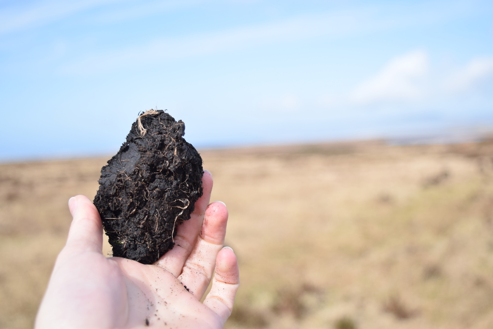 A nugget of Laphroaig's peat.
