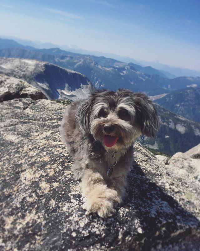 Love having a dog that's part mountain goat 🤙🏽 Happy #NationalDogDay!