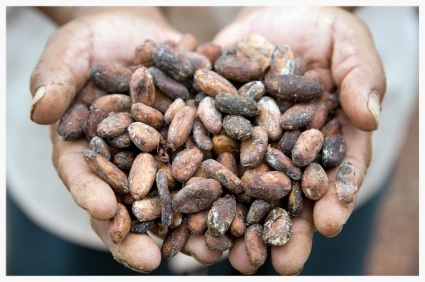 cacao hands.jpg