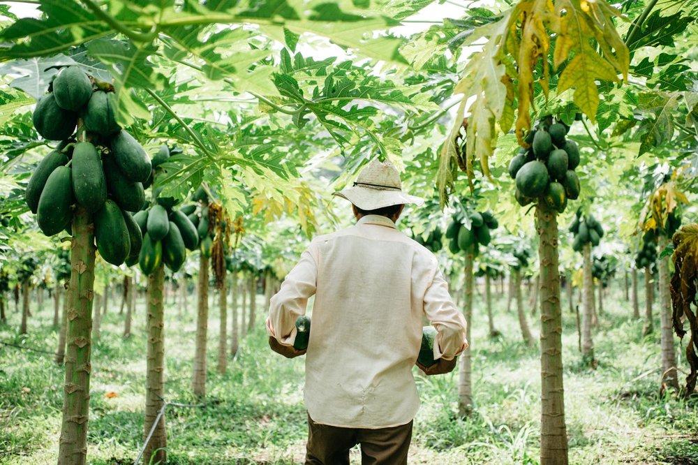 CONTACT US - info@farmconviction.com+503 7870 0045 (El Salvador)+1305 733 5033 (USA)