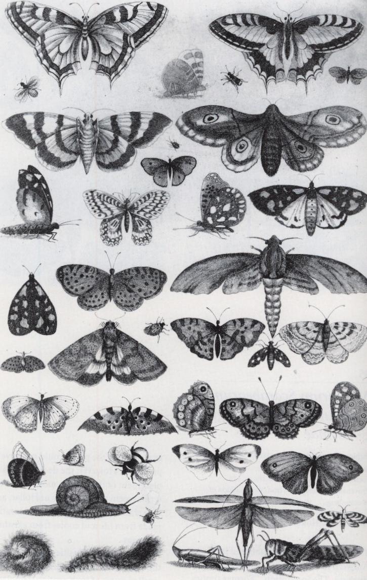 hollarbflies.jpg