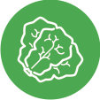 HF_Icon_Kale_Green.png
