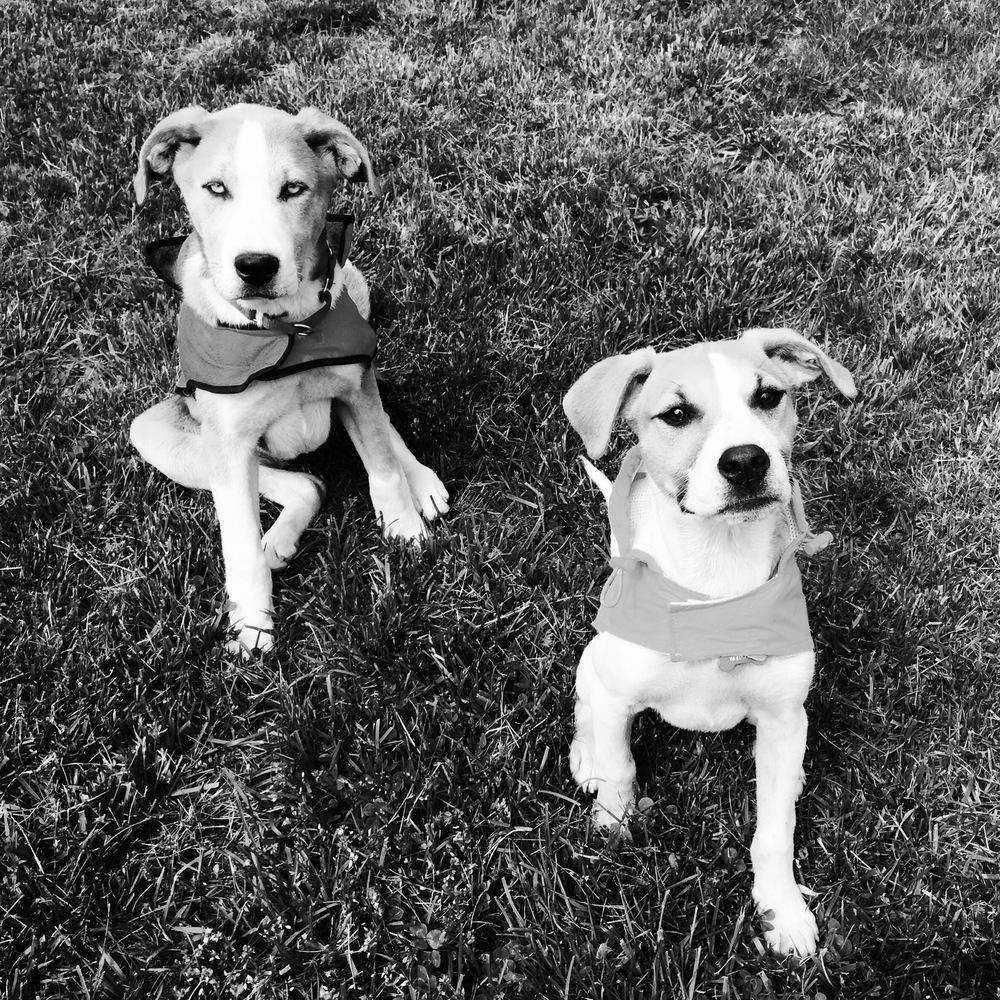Rufus and Sadie