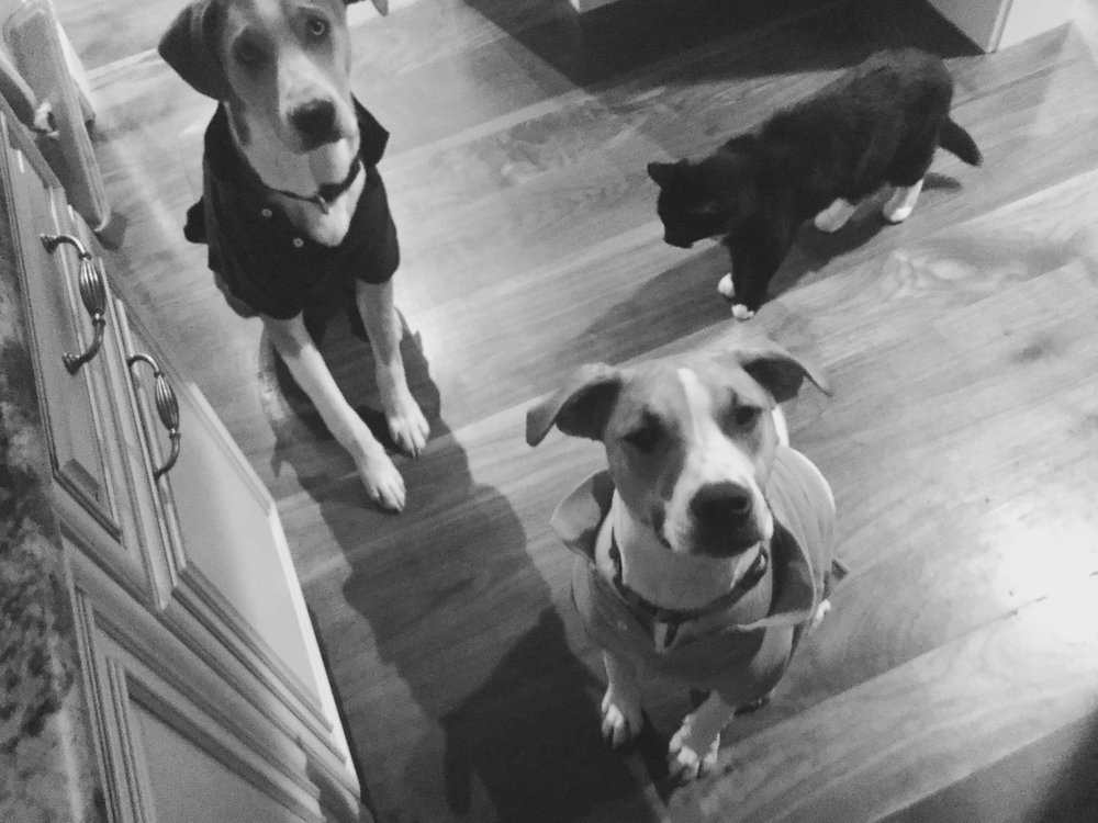 Rufus, Sadie, and Harley