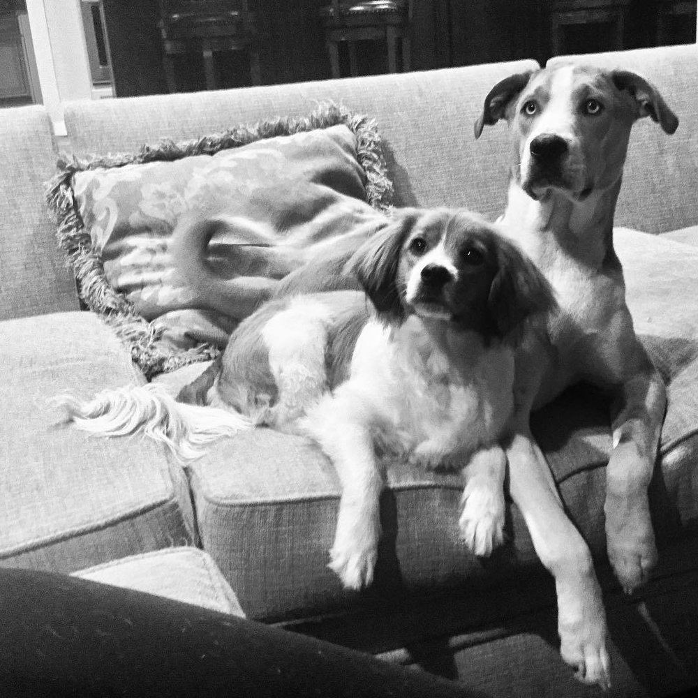 Rufus (my #catahoulaleopard / horse) watching old movies with Oliver. They are of course brothers from another mother - rescues - @ladyfegee and I find nothing more gratifying than them.  #catahoulaleopard #rufus #oliver #curiousmix @gcicma wish you had been there!  (at Endolane Farm)