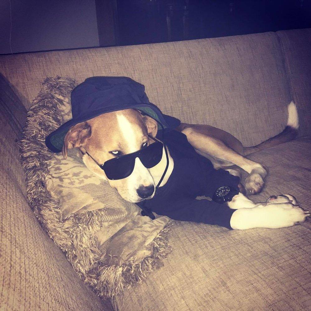 Now Tupac #catahoula