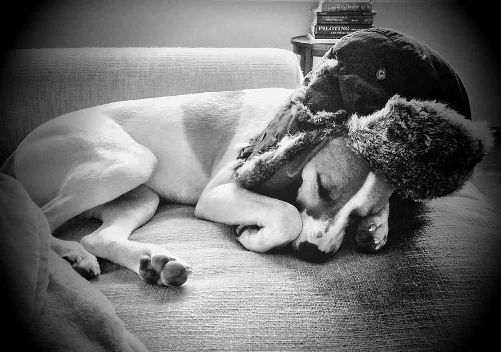 She's part beagle and part Russian. #babushka