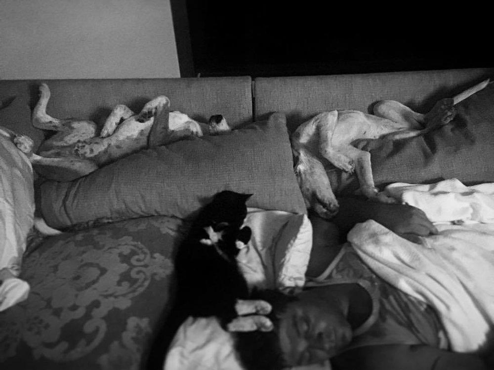 #thuglife #ish #sadie #rufus #harley #catahoulaleoparddog #hounddog #leopardcur