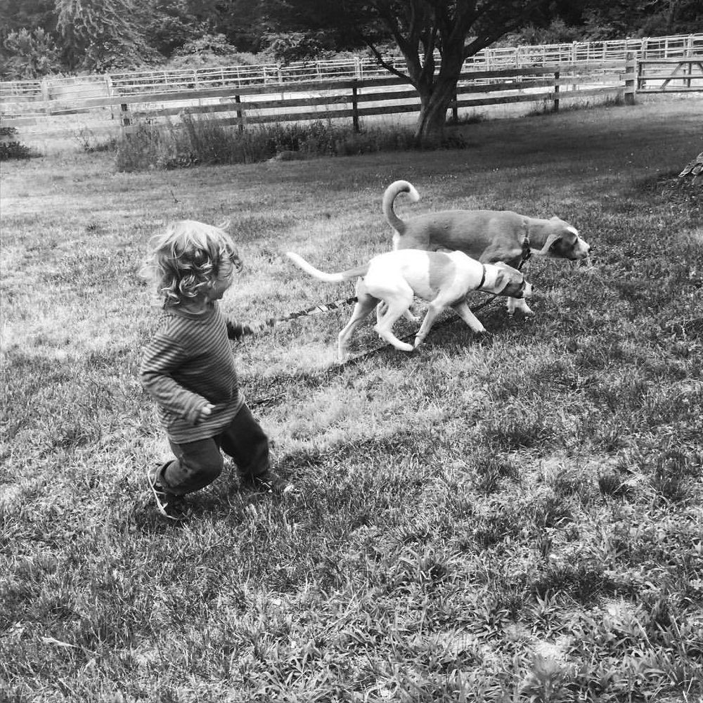 Our guests brought a special kind of dog whisperer around - a 2.5 year old. Whom they love, protect, and follow his lead. Thank you, little magician, for being here. #blackandwhite #paintedbylight  (at Endolane Farm)