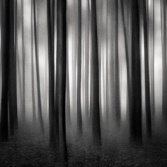Trees #paintedbylight #blackandwhite