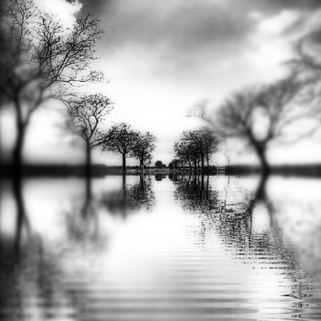 Spring, come to town! #blackandwhite #paintedbylight #noirvue #trees #water #shooter_mag #monochrome  (at Swan Point Cemetery)