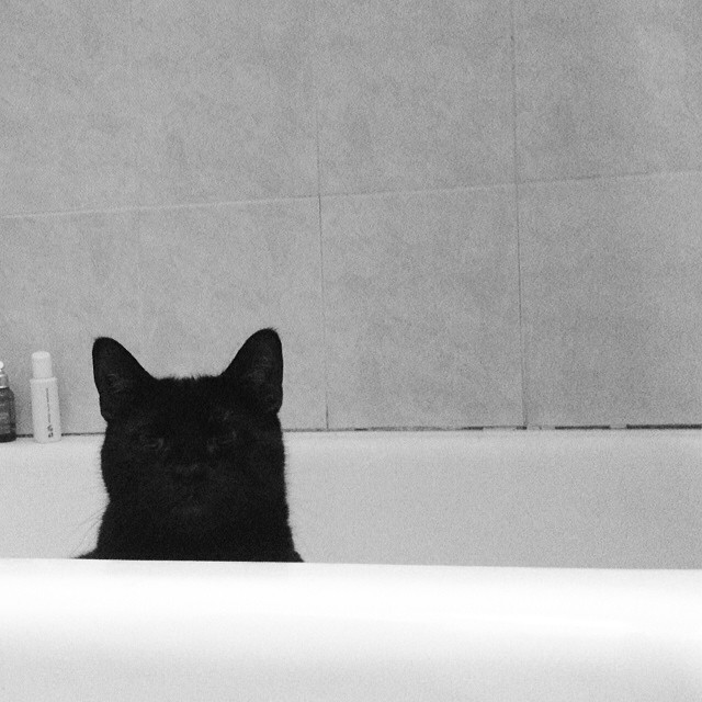 She thinks she's blending in…#fatcatproblems #noircat #bathtub #bw #nyc #brooklyn #fatpanther #maelee #blackandwhite #home